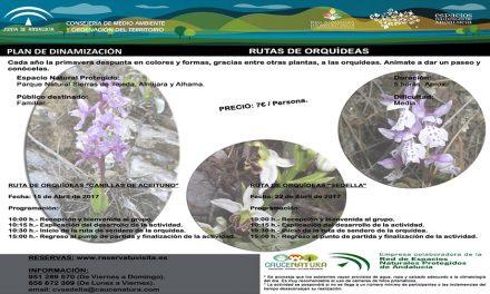 Rutas de Orquídeas en Sedella